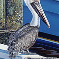 Pelican Blues Print by Danielle  Perry