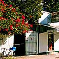 Pepes In Key West Florida by Susanne Van Hulst