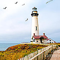 Pigeon Point Lighthouse by Artist and Photographer Laura Wrede