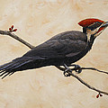 Pileated Woodpecker Print by Crista Forest