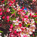 Pink Magnolia 2 by Joann Vitali