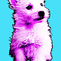 Pink Westie - West Highland Terrier Art By Sharon Cummings by Sharon Cummings