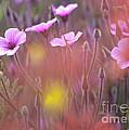 Pink Wild Geranium by Heiko Koehrer-Wagner