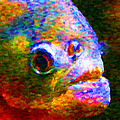Piranha by Wingsdomain Art and Photography