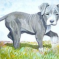 Pitbull Puppy by Martial Martin