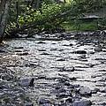 Poconos Gentle Stream by John Telfer