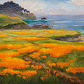 Point Lobos Poppies by Karin  Leonard