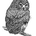 Pointillism Sawhet Owl Print by Renee Forth-Fukumoto
