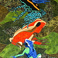 Poison Dart Frogs by Lynda K Boardman