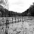 Pond Trail Adventures by Jennifer L Washington