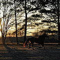 Pony's Evening Pasture Trot Poster by Paulette B Wright