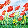 Poppies by Catherine Saldana