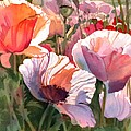 Poppy Madness by Kris Parins
