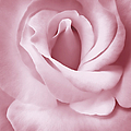 Porcelain Pink Rose Flower by Jennie Marie Schell