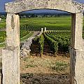 Portal  Of Vineyard.burgundy. France by Bernard Jaubert