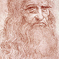 Portrait Of A Bearded Man by Leonardo da Vinci