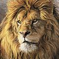 Portrait Of A Lion by Lucie Bilodeau