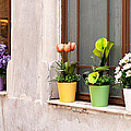 Potted Flowers 02 by Rick Piper Photography