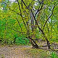Poudre Trees-2 by Baywest Imaging