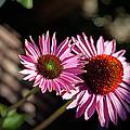 Pretty Flowers by Joe Fernandez
