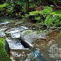 Pretty Green Creek by Kaye Menner