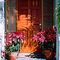 Pretty House Door In Key West by Susanne Van Hulst