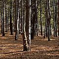 Provin Trails Park Forest by Richard Gregurich