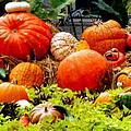 Pumpkin Harvest by Karen Wiles