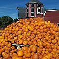 Pumpkin Heaven by David Schneider