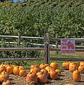 Pumpkins On The Farm by Joann Vitali