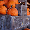 Pumpkins on the Wagon Print by Kerri Mortenson