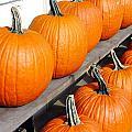 Pumpkins Print by Valentino Visentini