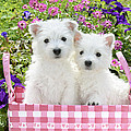 Puppies In A Pink Basket Print by Greg Cuddiford