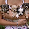 Puppies In Maria's Arms by John Lautermilch