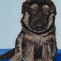 Puppy - German Shepherd by Anastasiya Malakhova