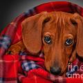 Puppy Love by Susan Candelario