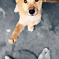 Puppy Saluting Print by William Voon