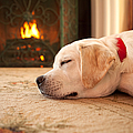 Puppy Sleeping By A Fireplace by Diane Diederich