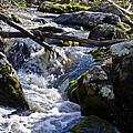 Pure Mountain Stream by Bill Cannon