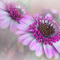 Purple Blooms by David and Carol Kelly