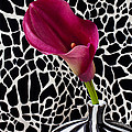 Purple Calla Lily by Garry Gay