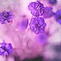 Purple Flowers Print by Marisa Horn