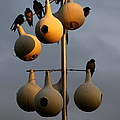 Purple Martin Twilight by Karen Wiles