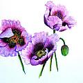 Purple Oriental Poppies by Karin  Dawn Kelshall- Best