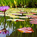 Purple Water Lily Flower In Lily Pond by Susan Schmitz