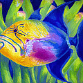 Queen Triggerfish by Stephen Anderson