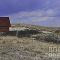 Race Point Light Shed by Catherine Reusch  Daley