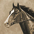 Racehorse Painting In Sepia by Crista Forest