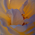 Radiance by Cathleen Cario-Reece