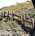 Rail Fence Black by Barbara Snyder